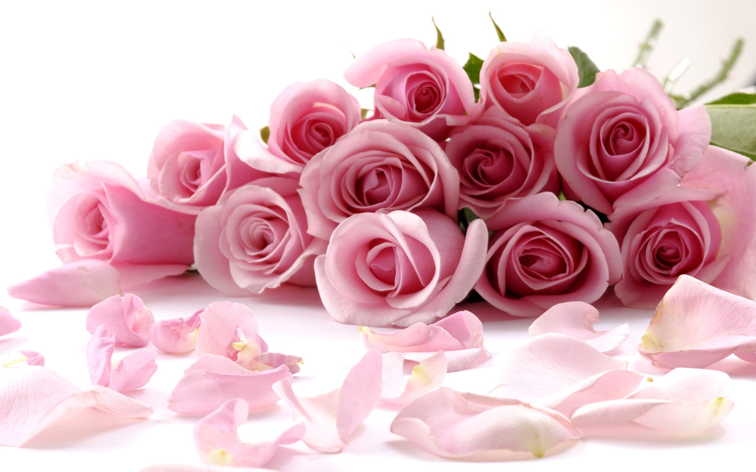 10942f-pink-flower-bucket-wallpaper